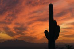 Brilliant sunset over Saguaro Cactus and Arizona's Sonoran Deser Royalty Free Stock Photos