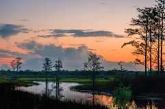 sunset through the trees of the swamps royalty free stock photo