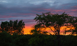 Brilliant sunset seen through trees Royalty Free Stock Photos