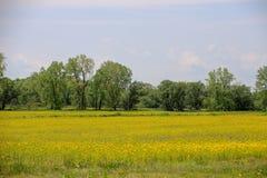 Mustard seed farm in Northder Ohio stock photos