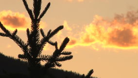 Brilliant yellow sunset and tree silhouette. Video of brilliant yellow sunset and tree silhouette stock footage