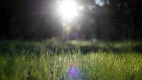 Brillo asombroso de la luz del sol durante puesta del sol con la hierba verde como fondo de la naturaleza wide fotografía de archivo libre de regalías
