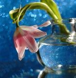 brillo de cristal de la reflexión del fondo del bokeh del florero del tulipán fotos de archivo