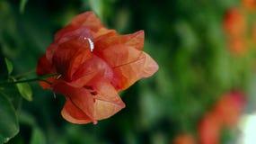 Brillo de la flor fotos de archivo