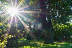 Brillo de la luz del sol radiante en la yarda de la universidad de estado de Moscú, Rusia Foto de archivo libre de regalías