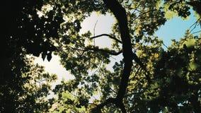 Brillo de los rayos de Sun a través de las hojas almacen de metraje de vídeo