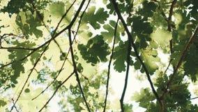 Brillo de los rayos de Sun a través de las hojas almacen de video