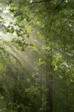 Brillo de los rayos a través de ramificaciones Fotos de archivo libres de regalías