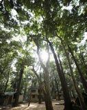 Brillo de Sun en los árboles fotografía de archivo