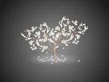 Brillo de un cerezo floreciente con las flores que caen Foto de archivo libre de regalías
