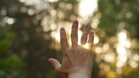 Brillo y centelleo de Sun a través de la mano de la mujer almacen de video