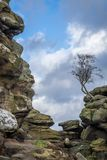 Brimham Rocks lone tree on rock outcrop in Yorkshire royalty free stock photography