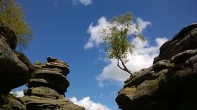 Brimham rocks. A sapling perches precariously on one of the weird rock formations Royalty Free Stock Images