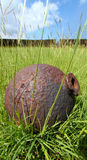 Brimstone Hill Fortress - St Kitts. An old cannonball at Brimstone Hill Fortress National Park - St Kitts Stock Photos