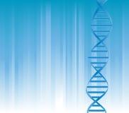 Brin d'ADN Photos stock