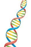 Brin d'ADN de double helice Photos stock