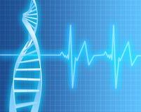Brin d'ADN et fréquence cardiaque Image libre de droits