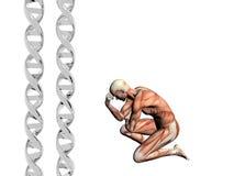 Brin d'ADN, homme musculaire. Images libres de droits