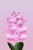 Brin d'orchidée fleurissante Photos stock