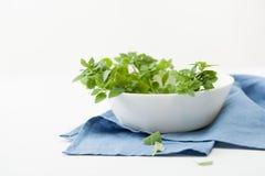 Brin de Basil vert d'un plat blanc Copiez le texte de l'espace Photo libre de droits