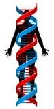 Brin de chromosome d'ADN de personne et de double hélice illustration de vecteur