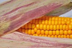 Brin de maïs vu vers le haut de la fin Images libres de droits