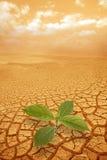 Brin de pousse en prise de masse droughty photos stock