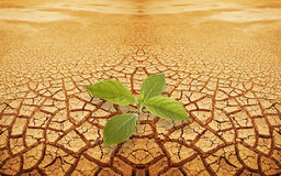 Brin de pousse en prise de masse droughty
