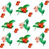 Brin des baies et des fleurs illustration libre de droits