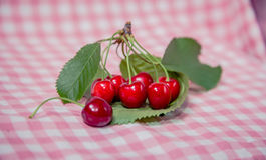 Brin des cerises, cerises mûres Image stock