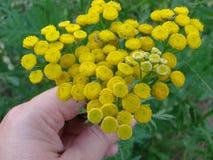 Brin des fleurs jaunes à disposition image stock