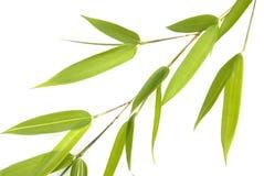Brin en bambou - groupe d'isolement Image libre de droits