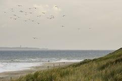 Brin op de taqueur, taqueur à la plage photographie stock