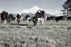 Brin rural de barrière de barbelé d'image avec le noir brouillé et le petit morceau Photographie stock