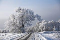 Brina degli alberi glassata paesaggio della strada di inverno Immagini Stock Libere da Diritti