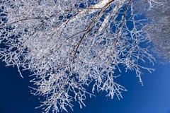 Brina, paesaggio di Œwinter del ¼ di Christmasï Immagini Stock
