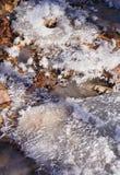 Brina sopra le foglie di autunno morte al sole Fotografie Stock Libere da Diritti