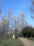 Brina sugli alberi nell'inverno in parco di Lovanio, Belgium4 Immagine Stock Libera da Diritti