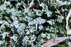 Brina sull'erba durante il gelo di mattina Fotografie Stock Libere da Diritti