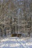 Brindge在多雪的森林里 免版税库存照片
