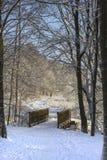 Brindge in foresta nevosa fotografie stock libere da diritti