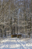 Brindge w śnieżnym lesie Zdjęcia Royalty Free