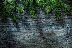 Brindille d'arbre conifére sur le conseil en bois photos libres de droits