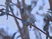 Brindille d'hiver Photo libre de droits