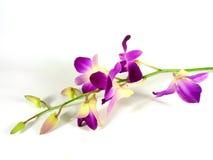 Brindille de fleur Images libres de droits