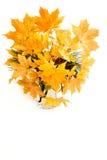 Brindille de pin et de cônes naturels de pin Photo libre de droits