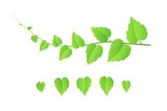 Brindille de vecteur avec des feuilles Photo libre de droits