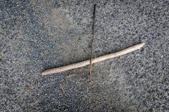 Brindille et arbre sur la route Photos stock