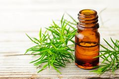 Brindille fraîche d'arbre de thé et huile essentielle sur le conseil en bois photos stock