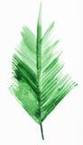 Brindille fraîche de palmier Photographie stock